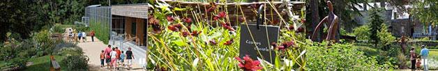 jardin camifolia Chemillé