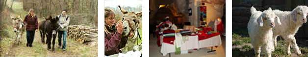 Les ânes pour découvrir l'Anjou